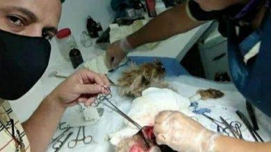 En una clínica veterinaria de Playa Grande denuncian mala praxis médica